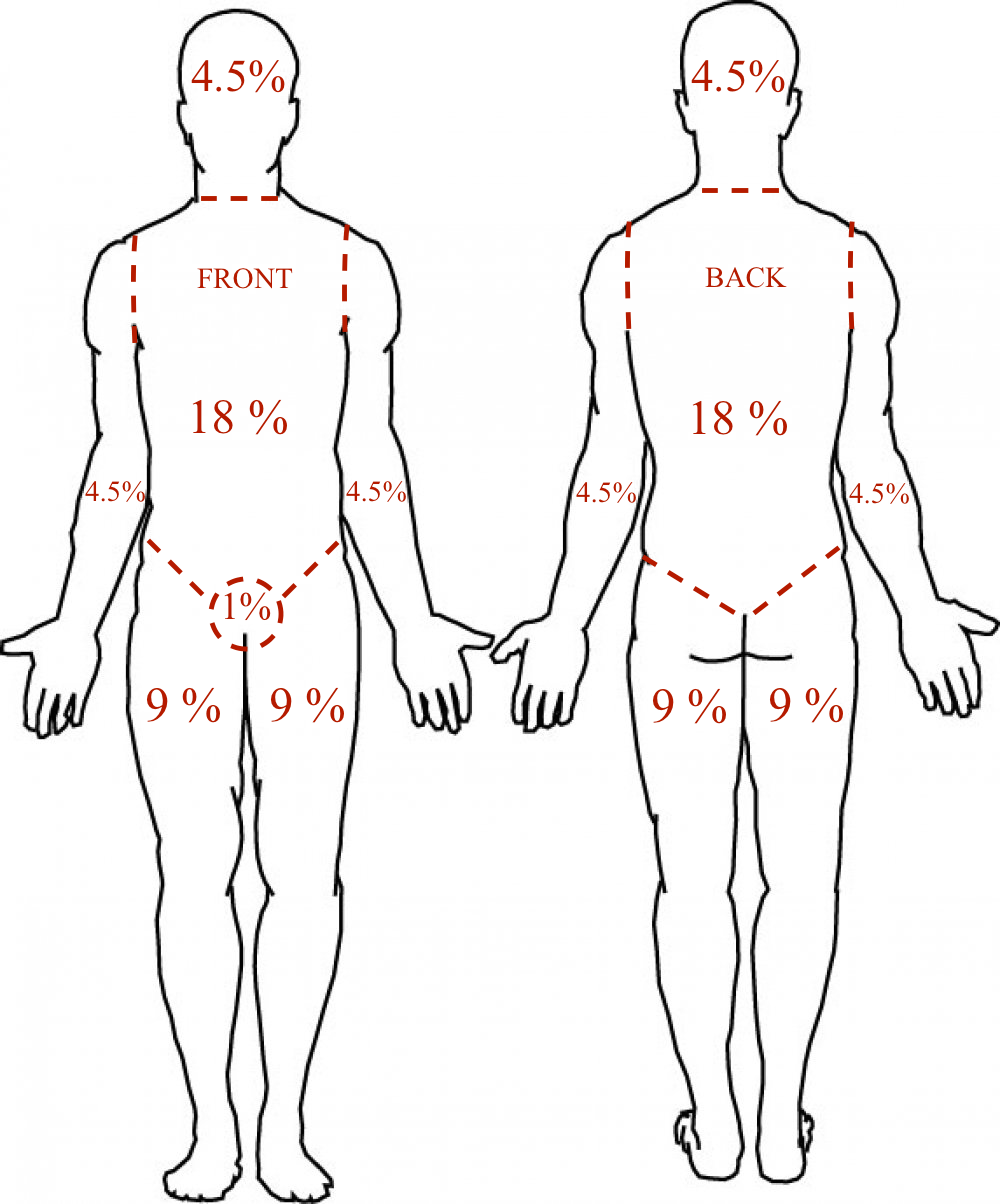 body outline adult